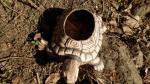 želva,keramický květináč